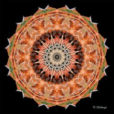 Mandala ''Apfel Kreatives by Petra - Foot Cares Petra, Photoshop, Punch Bowls, Orange, Fruit, Canon, Mandalas, Photos, Nature Photography