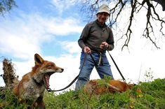 Cet homme a sauvé la vie de trois bébés renards, et ils n'ont plus jamais voulu le quitter !