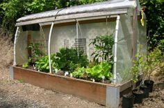 """Plant of Renown  Build your own raised bed cloche! Grab the """"how-to"""" from Oregon State here: http://extension.oregonstate.edu/catalog/pdf/ec/ec1627-e.pdf"""