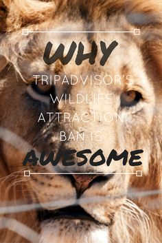 WHY TRIP ADVISOR'S WILDLIFE ATTRACTION BAN IS AWESOME NEWS 🙌🏼