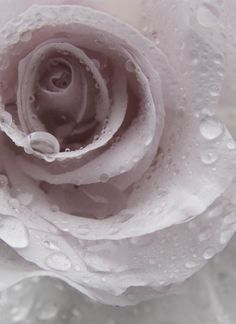 Beautiful Light Pink and Black Weddings Shades Of White, Shades Of Purple, All White, Pure White, White Stuff, Blanco White, White Aesthetic, Aesthetic Pics, Love And Light