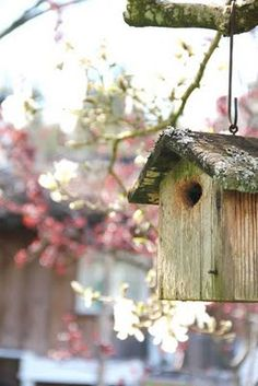 Spring is coming! I can't wait to welcome back the birds!