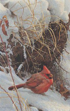 Winter Cardinal by Robert Bateman