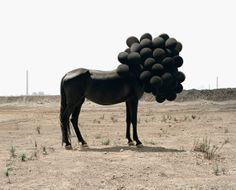 Andrea Galvani, photographe italien vivant à New York, a fait son petit bonhomme de chemin depuis quelques années et a foulé un bon nombre de pays à l'occasion d'expositions, de foires… pour exposer son travail. J'ai décidé de vous présenter un florilège de ses photos, issues de divers projets, mais dont le résultat est toujours aussi beau que déroutant.