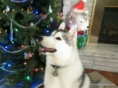 Gone to the Snow Dogs - Google+