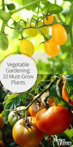 Whether you're a beginner or not, you'll love this list of must-grow plants in a vegetable garden. We're making vegetable gardening easier for everyone by sharing our best gardening tips for what, where, and what to plant in a garden filled with fresh produce.