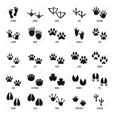 Find Animal Footprint Icons Set Simple Illustration stock images in HD and millions of other royalty-free stock photos, illustrations and vectors in the Shutterstock collection. Bear Footprint, Footprint Tattoo, Chicken Tattoo, Animal Footprints, Especie Animal, Animal Doodles, Animal Tracks, Simple Illustration, Art Sketchbook