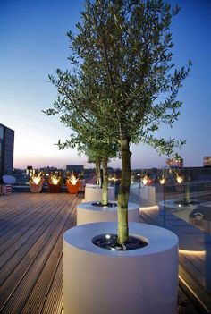 Olive in modern pot on rooftop garden. Olive in modern pot on rooftop garden Contemporary Planters, Contemporary Building, Contemporary Cottage, Contemporary Architecture, Sustainable Architecture, Residential Architecture, Contemporary Stairs, Kitchen Contemporary, Contemporary Apartment