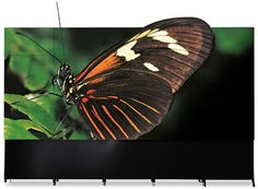 3D Videowall Insects, 3d, Animals, Log Projects, Boats, Animales, Animaux, Animal, Animais
