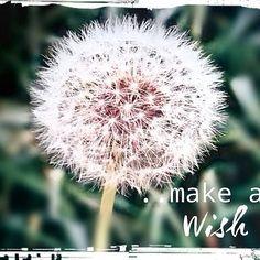 """SiebenPfeile's Blickwinkel """".. make a wish"""""""