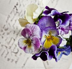 I am going to grow so many pansies, how pretty