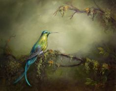 Long-tailed Sylph Hummingbird by Gaby Hunter