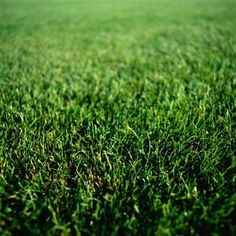 How Lime helps your Lawn