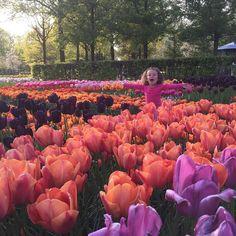 Cores da primavera!  by flaviawaltrick