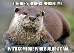 I Don't Build a Dam