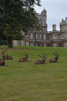 I would love to wake up to this in my yard. ;). Wollaton Park ~ England - Alpenstrasse