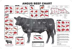 Different cuts on Angus cattle.