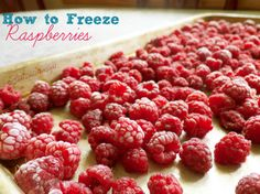 How to Freeze Raspberries without sugar and for easy fresh raspberries all winter long!