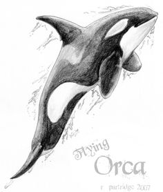 Google Image Result for http://www.deviantart.com/download/46269843/Flying_Orca_by_SyKoticOrKa.png