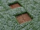Isotoma fluviatilis is an easy groundcover to grow between stepping stones