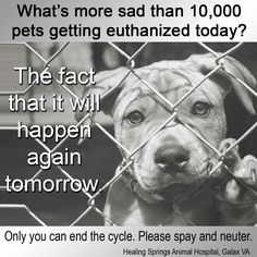 PLEASE spay and neuter your furbabies!