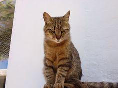 野良猫@イタリア、カプリ島