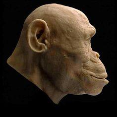 "Ples"") - reconstruction by Kennis & Kennis Human Evolution, King Kong, Primates, Goblin, Prehistoric, Sculpting, Filipina, Animal Anatomy, Sculpture"