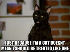 "Salem use logic, ""You are a cat so therefor you shall be treated like one."""