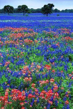 Texa meadow.  Photo by Ron Niebrugge
