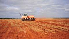 Os trabalhos estão atrasados 16,7 pontos percentuais em relação à mesma época do ano passado, quando estavam semeados 49,4%