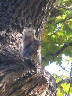 Cape Town, Squirrel, Gardens, Bear, Animals, Animales, Animaux, Squirrels, Outdoor Gardens