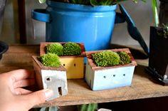 moss house  盆栽 新入荷 : Kitowaの日々