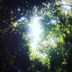 【koyamataiga】さんのInstagramをピンしています。 《shine  taiga-koyama.com ・ ・ ・ ・ ・ ・ ・ ・#tale#breath#blueplanet#time#mathernature#mathreearth#pray#love#loveyou#forever#photography#kobe#japan#trip#travel#outwalking#forest#beginning ・ ・ ・ ・ ・ ・ ・ ・ #写真#真理##神戸#日本#祈り#旅#森#陽射し#始まり》