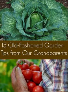 A list of garden tips and tricks that our grandparents and great-grandparents may have used in their own gardens. A mix of lore science and just-for-fun ideas. A list of garden tips and tricks that our grandparents and great-grandparents may h Tips And Tricks, Growing Herbs, Growing Vegetables, Growing Flowers, Gardening For Beginners, Gardening Tips, Vegetable Gardening, Kitchen Gardening, Raised Garden Beds