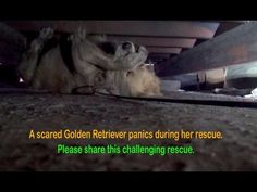 Terrified, Homeless Dog Panics During Her Rescue, But See How She Reacts When She's Finally Safe! (VIDEO) | One Green Planet