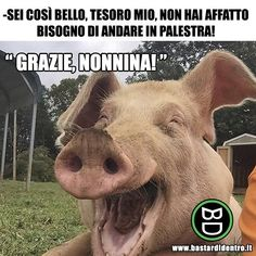 The most happy pig I've ever seen! Funny Pigs, Cute Pigs, Funny Jokes, Funny Pig Pictures, Funny Animals, Cute Animals, Smiling Animals, Happy Pig, Happy People