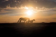 'By Your Side' ~ Natalie Buck Photography 'Untamed Beauties'  Wild Assateague Ponies  #wild #horse #horses #photography #assateague #Connecticut #Maryland #photographer #wildhorsephotography #pony #ponies #beach #ocean #summer
