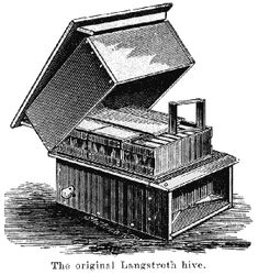Langstroth's hive was fitted with a comb honey super.
