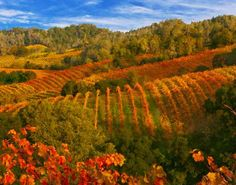Fall Upon Us in Sonoma County