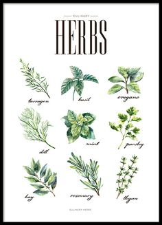 Print for the kitchen with tasty herbs that are popular when cooking. Kitchen wall art with nice green illustrations that goes well with trendy and modern interior design. www.desenio.com