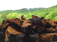 Raw Wild VERMONT Natural CHAGA Mushroom Choose Your Weight &