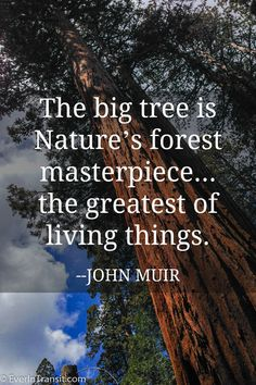 "Poetry Of John Muir: Quotes on Nature, Conservation & Travel On Giant Sequoias - ""The big tree is Nature's forest masterpiece"" - John Muir quotesOn Giant Sequoias - ""The big tree is Nature's forest masterpiece"" - John Muir quotes Save Nature Quotes, Mother Nature Quotes, Nature Quotes Adventure, Vintage Nature Photography, Nature Photography Flowers, John Muir Quotes, Tree Quotes, House In Nature, Big Tree"
