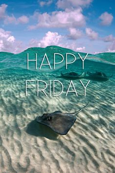 Even sea creatures like Friday.