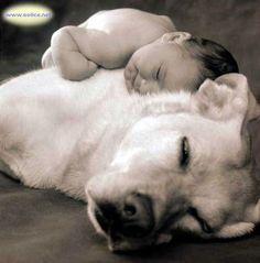 - La tendresse chez les animaux