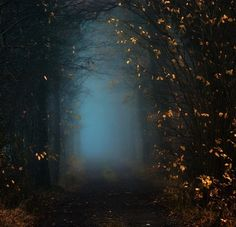 Wandering in the Woods, Oer-Wout