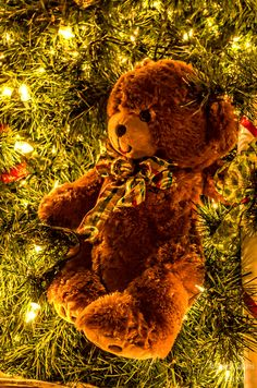 Brown Teddy Bear On XMas Tree Country Christmas Nashville TN print will make great wall decor for your home, apartment or office. You can have the print framed or unframed and can showcase it on canvas wraps to glass prints.  #holiday #christmas #xmas #photography