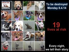 19 beautiful dogs have their lives at stake and need us to help give them a future. Please share everywhere. This is a VERY high kill facility.  To rescue a Death Row Dog, Please read this: http://urgentpetsondeathrow.org/must-read/ To view the full album, please click here: https://www.facebook.com/media/set/?set=a.611290788883804.1073741851.152876678058553&type=3