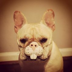 'Happy Easter', French Bulldog in Bunny Mask.