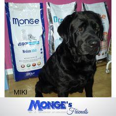 Miki #Mongesfriends
