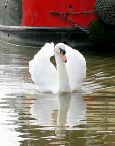 """""""If lilies would grow backwards, if roses would grow backwards, if all those roots could see the stars & the dead not close their eyes, we would become like swans."""" -  Federico García Lorca"""